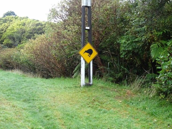 Attention Kiwi !!