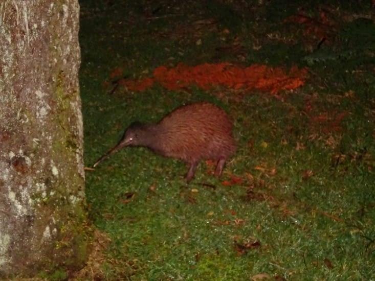 Kiwi !