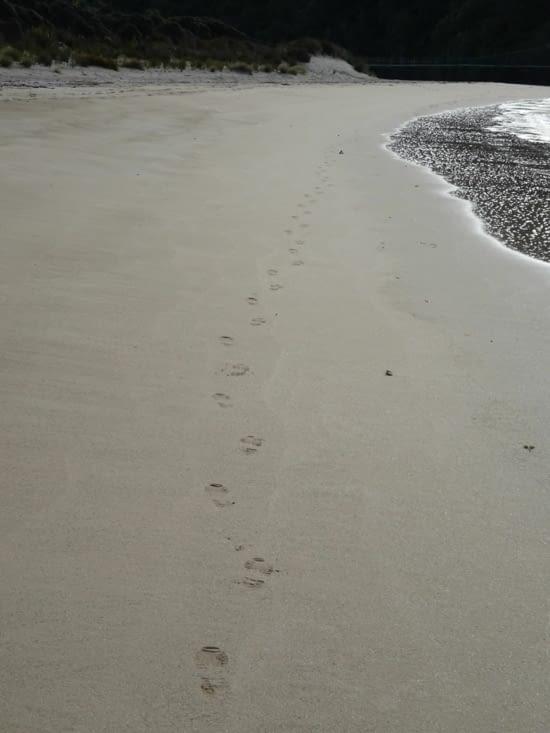 Seul sur la plage