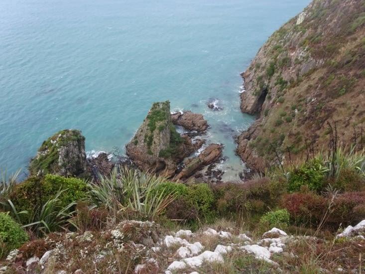 La végétation du bord de mer ...