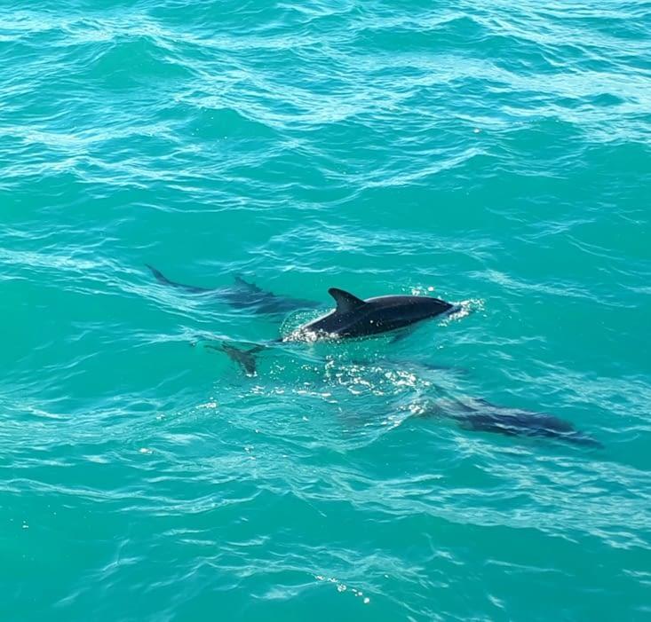 Les dauphins!!