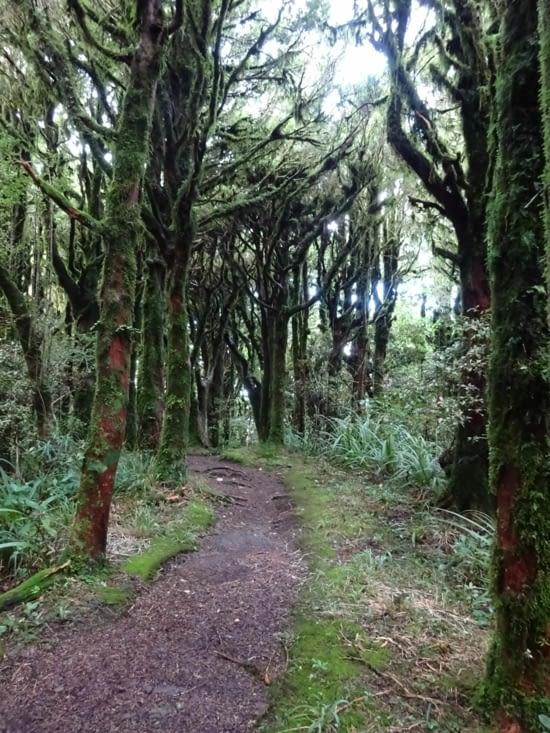 Encore une belle forêt