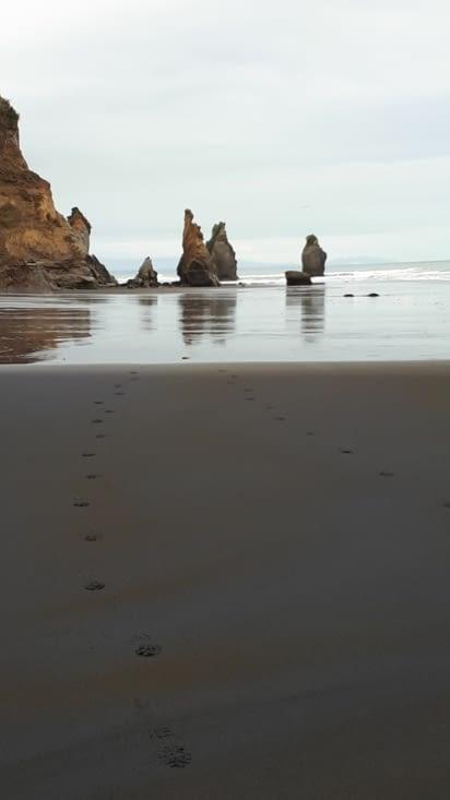 Un free camp sur la côte ouest avec une géologie très particulière ...