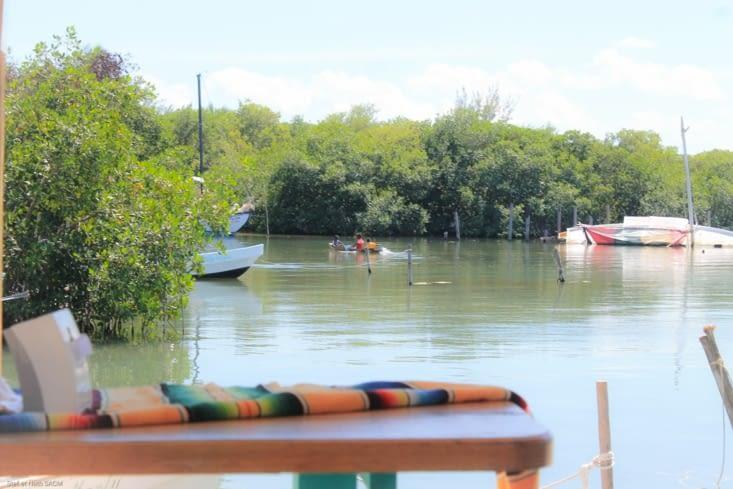Pendant ce temps-là  3 garçons s amusent dans  la mangrove sur un canot
