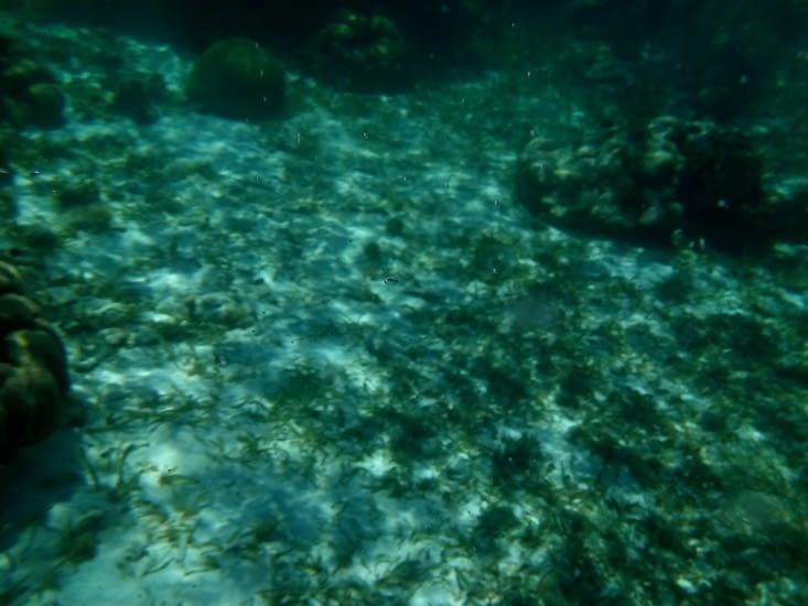 Mer translucide