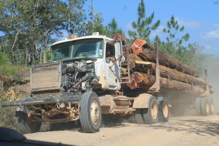Transport de bois de jungle