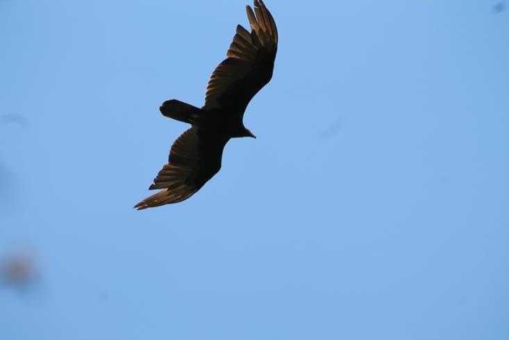Un gros  oiseau