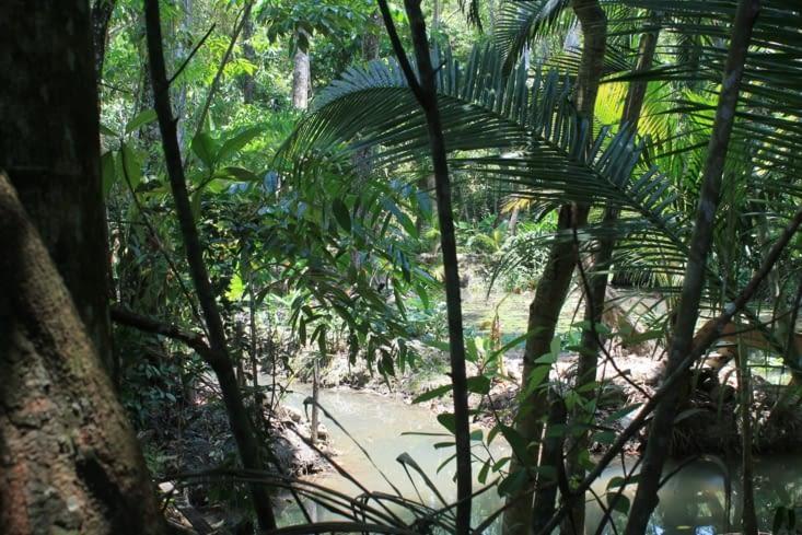 Jungle un dense