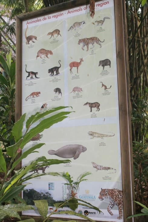 Panel animalier de la région