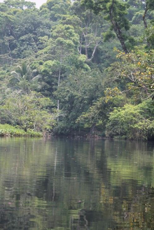 Rio calme et végétation dense