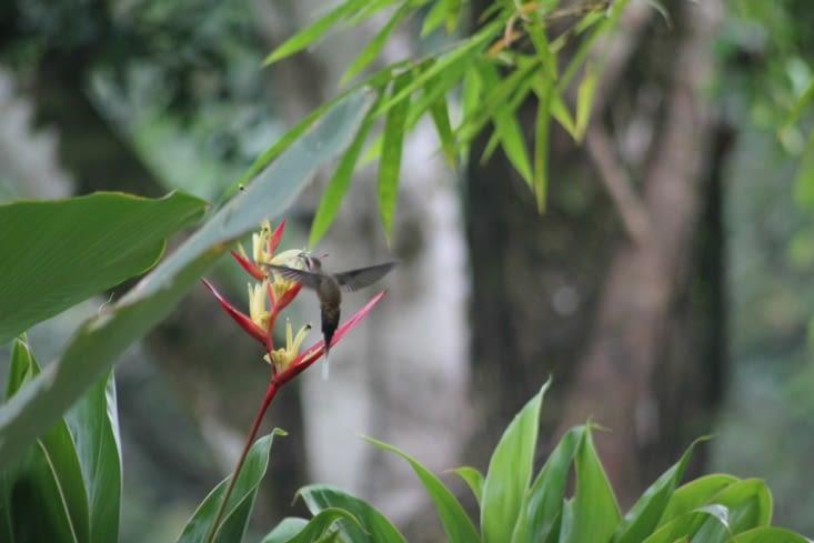 Un colibris qui déjeune