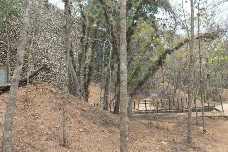 Copan dans la végétation assez dense