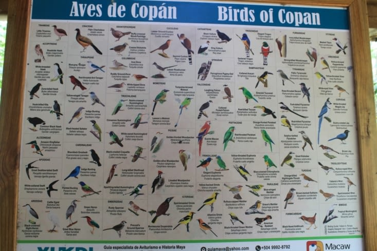 Oiseaux de Copan