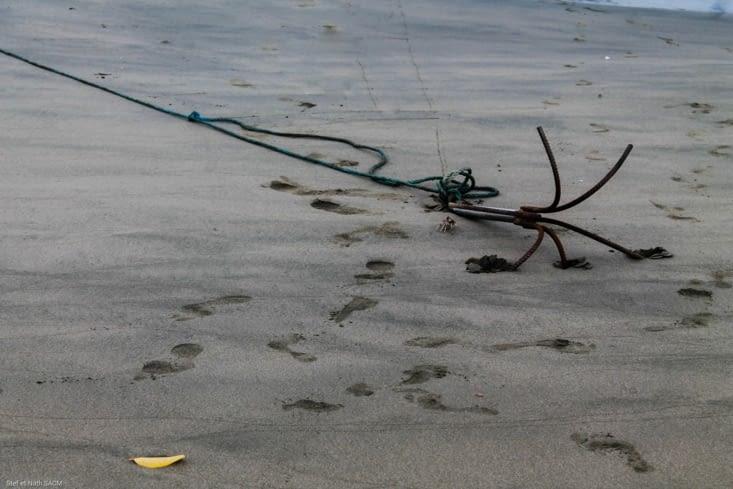 Crabe de plage
