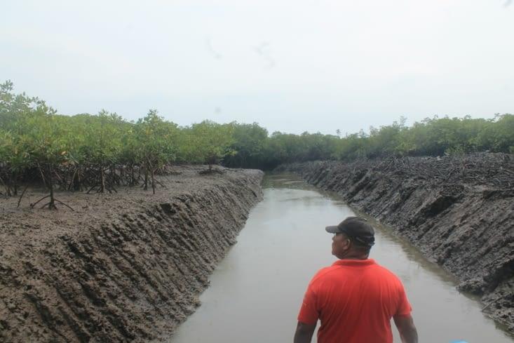 Projet de construction d'un port dans la mangrove