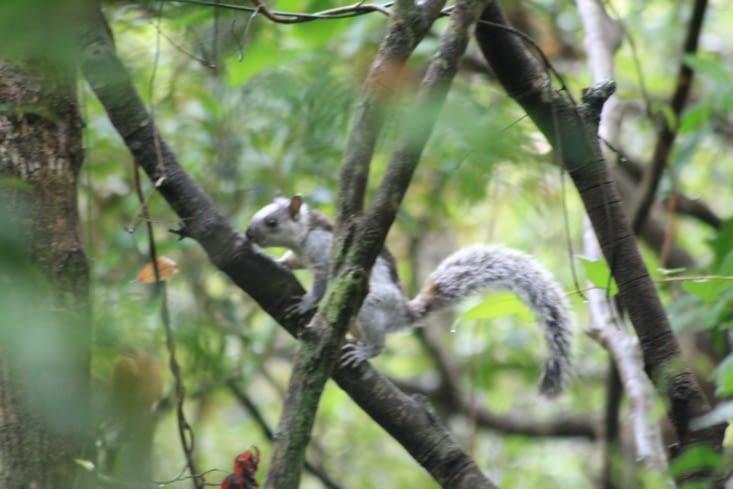 Un écureuil pas farouche