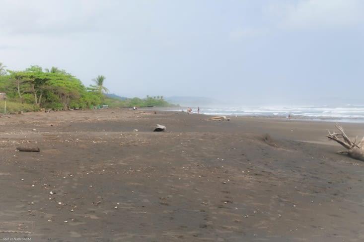 Ramasseur d'oeuf de tortues à Ostional