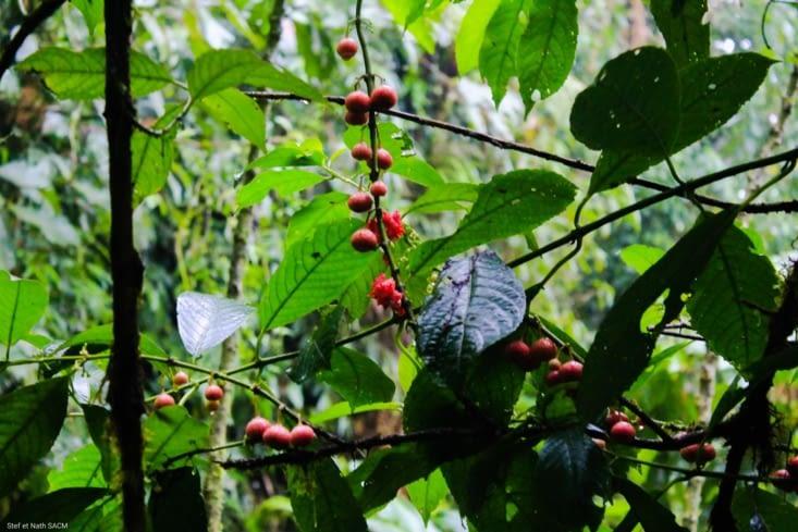 Fruits de la forêt