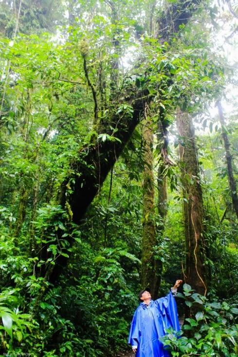Les plantes de la forêt