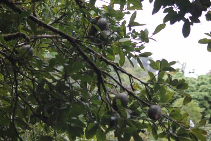 Avocats des cimes