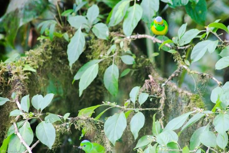 Couple jolis oiseaux
