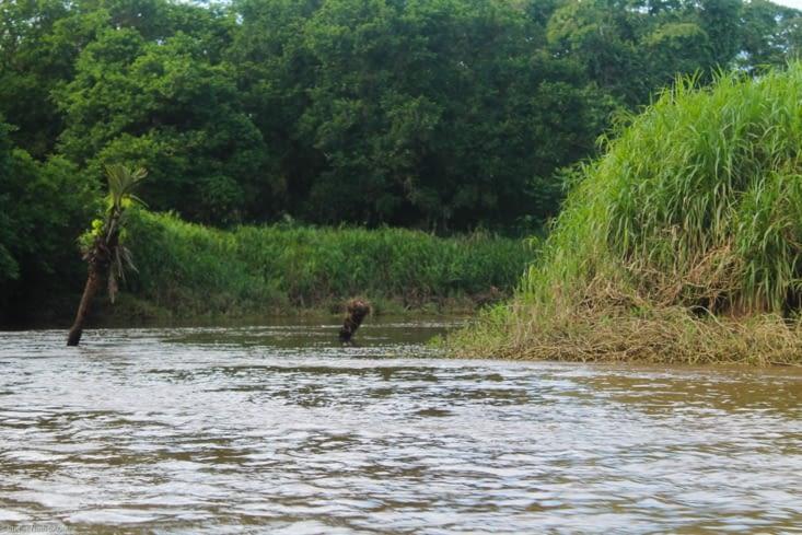 Rives de fleuve