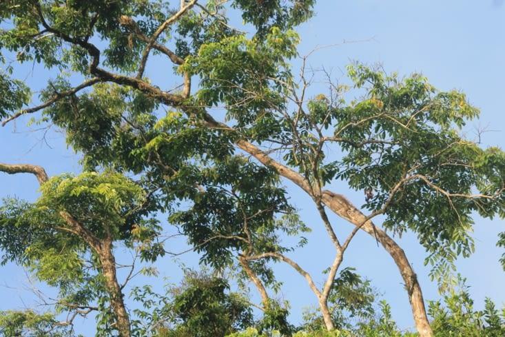 Sur cet arbre il y a iguane le voyez vous?    L art du camouflage