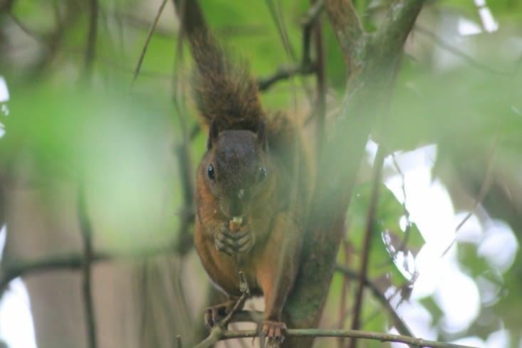 Notre ami l écureuil
