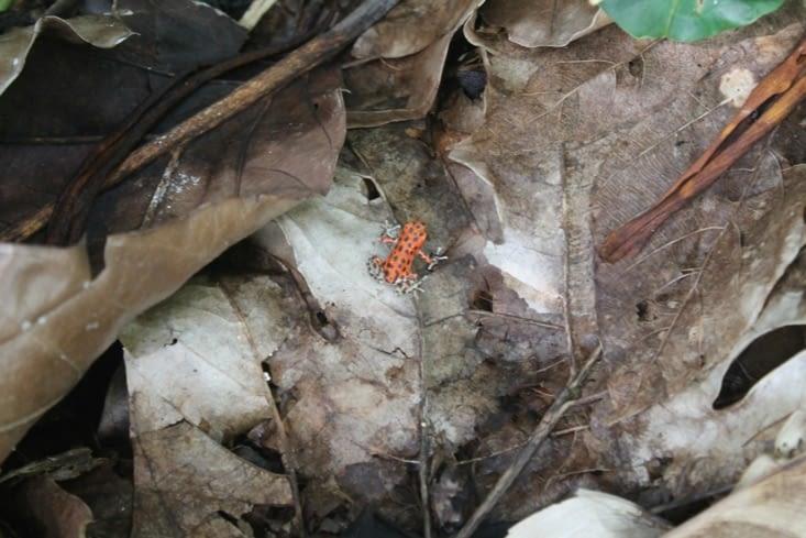 Dans tout ce bourbier on a trouvé un grenouille fraise :-):-)