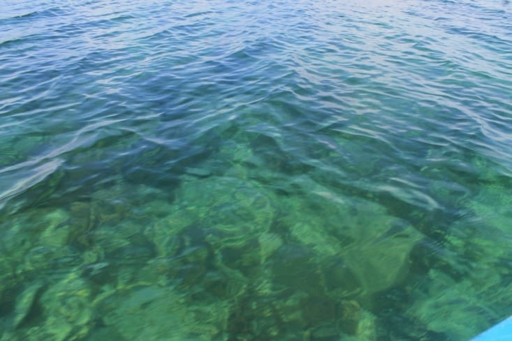 Jardin sous marin