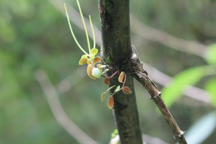 Plante parasite