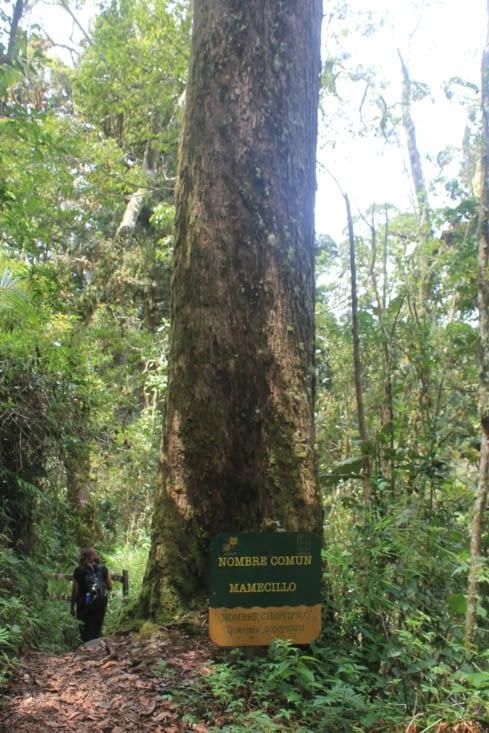 Un grand arbre