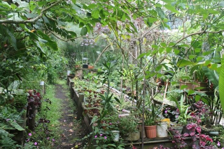 Pépinière du jardin