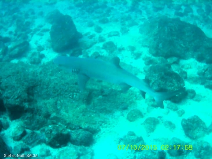 Deuxième plongée  il y a du requin