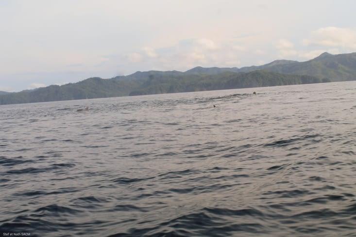 La surprise des dizaines de grand dauphins autour de nous