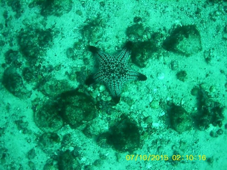 Étoile de mer endémique de cette zone