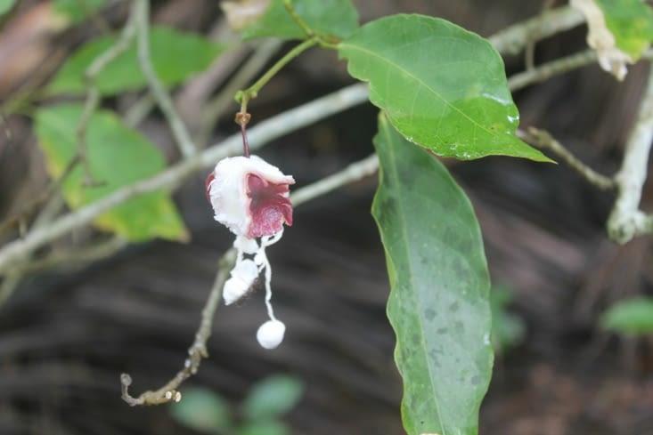 Autre fleur un peu fanée