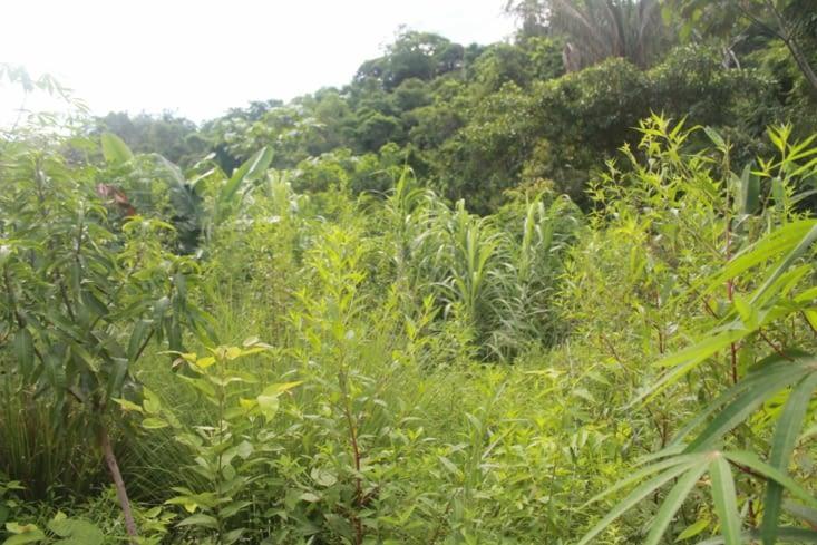Jardin s étend sur la colline