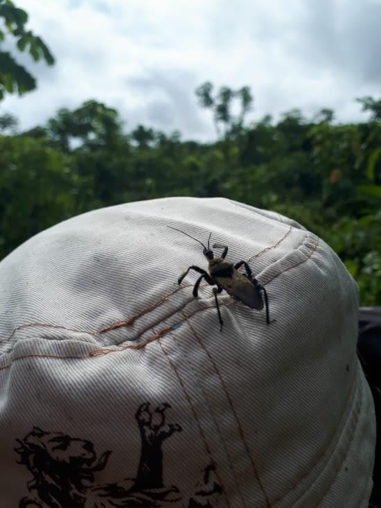 Cet insecte aime bien la casquette de stef