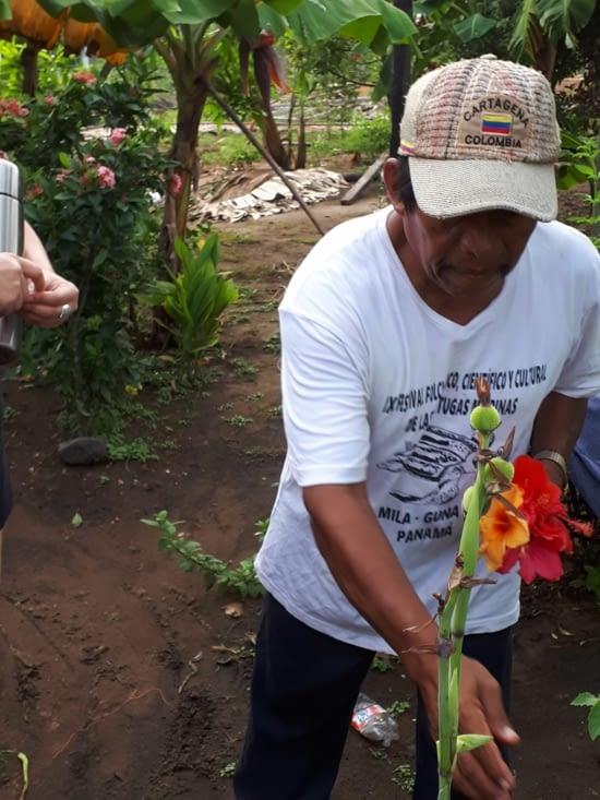 Natcho et ses fleurs, les hibiscus