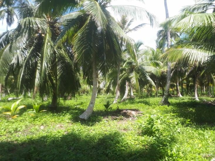 La banque de cocos