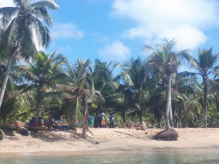 Les femmes trient les cocos