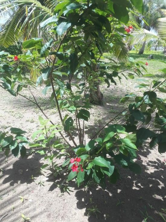 La plage est aménagée d arbustes floraux