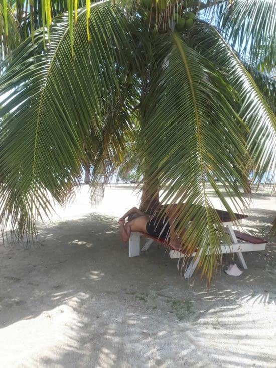 La sieste  à  l'ombre