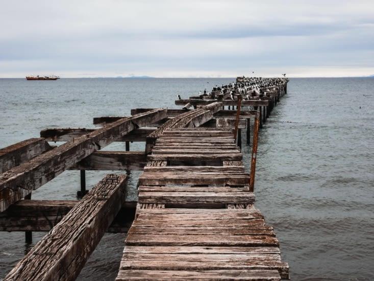 Ancien ponton de bois sur lequel les cormorans ont élu domicile