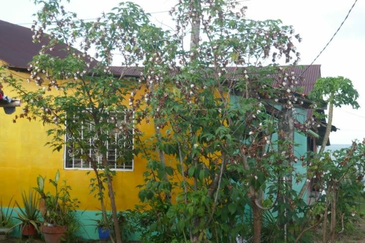 Couleurs et végétation