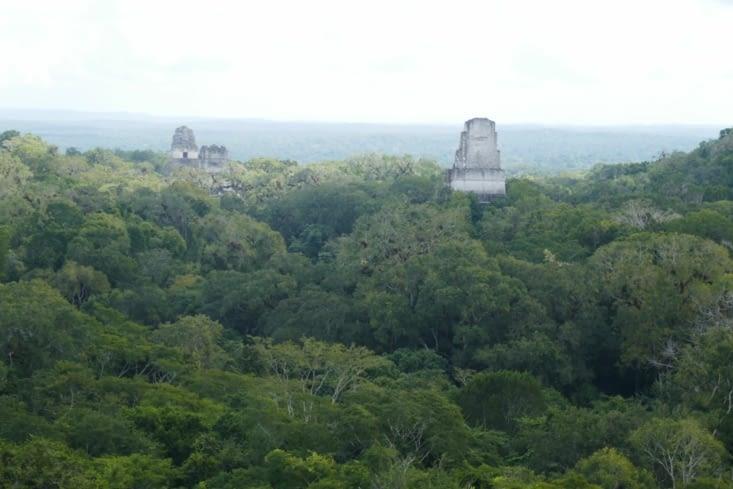 Vue du sommet, à un peu plus de 60 mètres de hauteur.