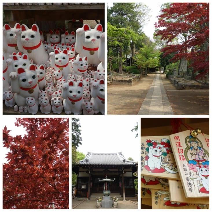 Temple des chats, dans le paisible quartier de Gotokuji