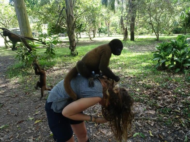 L'attaque des singes ^^