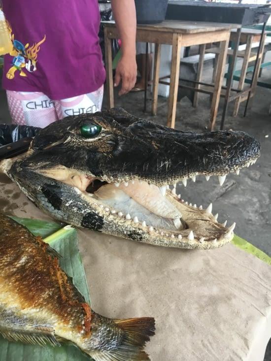 Qui veut manger du caiman ???? C'est assez bon :p